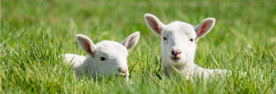 Lonsdale Livestock | Blog